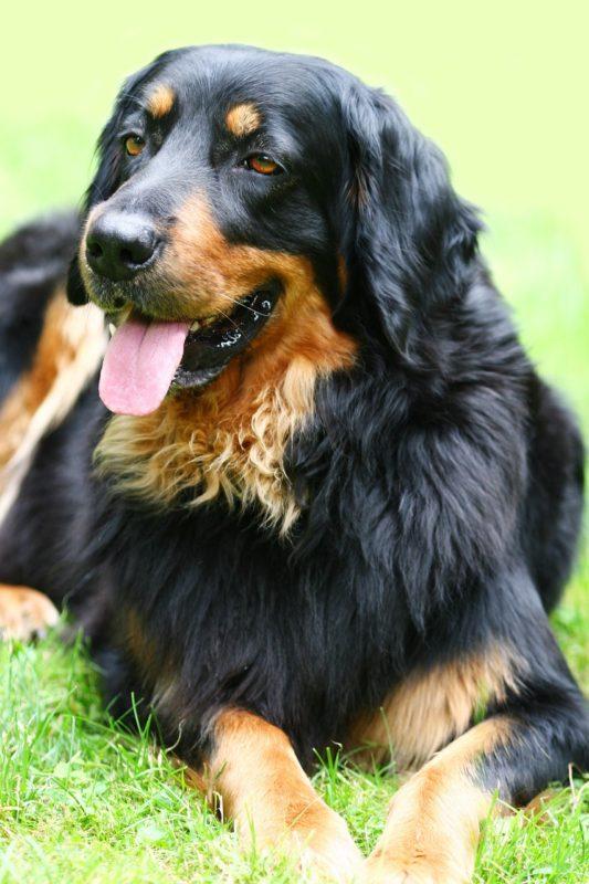 dog-1194081_1280